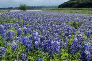 blue-bonnets-1238139_640-300x200 How To Find Office Space In Austin, The Top 5 Options